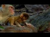 Животные похожи на нас - 06 Приемные детеныши