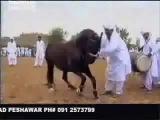 Лошадь танцует лезгинку!!!!